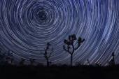Star Trails and Milky Way in Joshua Tree National Park — Stock Photo