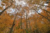 Fall Colors in the Sierra Mountains California — Foto de Stock