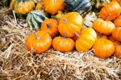 Pumpkins in a farmland — Stock Photo