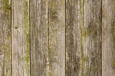 Old mossy wood texture — Stock Photo