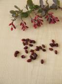 Barberry twigs and dried barberries — Stock Photo