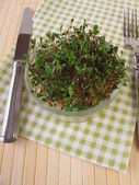 Sprouted alfalfa seeds — Stock Photo