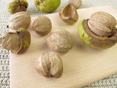 Shellbark hickory nuts — Stock Photo