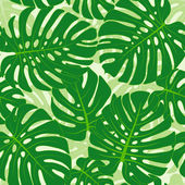 Monstera leaves background — Stock Vector