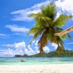 Palm beach — Stock Photo #77762050