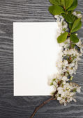 Cherry blossoms and paper — Stock Photo