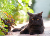 Lying black cat — Stock Photo