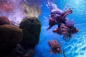 Marine creature in Aquarium  — Stock Photo