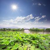Skyline west  lake and waterlily — Stock Photo