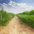 Empty road and green field at sunny day — Stock Photo #63120713