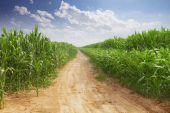 Empty road and green field at sunny day — Stock Photo