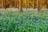 Flower blossom in forest — Stock Photo