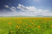 Cloudscape meadow and wildflowers in spring — Stok fotoğraf