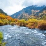 Autumn forest in jiuzhaigou — Stock Photo #52447067