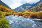 Autumn forest in jiuzhaigou — Stock Photo