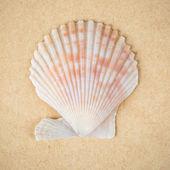 Scallop shell closeup — Stock Photo