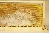 Waxed honeycomb with honey — Stock Photo