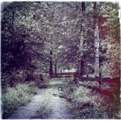 Path into forest, instagram style — Stock Photo