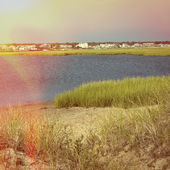 Estuary and grasses in coastal area — Stock Photo