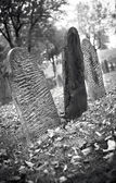 Fall graveyard in black and white — Stock Photo