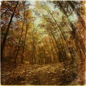 Forest trail in autumn, instagram style — Stock Photo