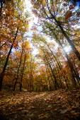 Forest trail in autumn — Stock Photo