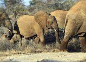 Elephant — Stockfoto