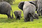 Slon — Stock fotografie