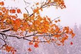 Dağda ağaç sarı yaprak — Stok fotoğraf