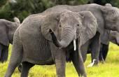 Elephant — ストック写真