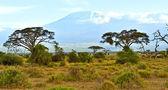 Mount Kilimanjaro  — Stock Photo