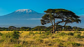 Amboseli National Park — Stock Photo