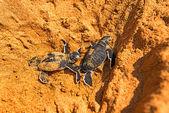 龟 — 图库照片