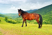 Horse on a background of mountain — ストック写真