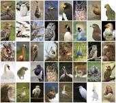 Collage birds — Stock Photo