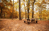 Boş tezgah parkı — Stok fotoğraf