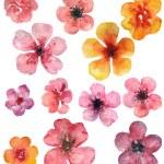 Watercolor flowers set — Stock Photo #58966859