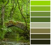 Forest stream, color code — Stock Photo