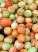 Tomates — Foto de Stock