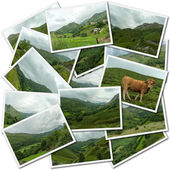 Pastures collection — Stock Photo