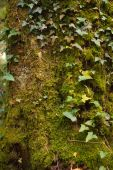 Moss covered tree trunck — Stock Photo