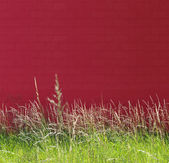 Nature and red wall — Stock Photo