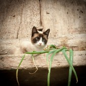 Rural cat — Stock Photo