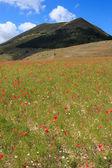 Flowering in Castelluccio di Norcia — Stock Photo