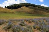 Castelluccio di Norcia - Monti Sibillini — Stock Photo