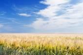 Arable Field under Blue Sky — Stock Photo