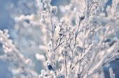 Frost winter branches and defocused snow. — Stock Photo