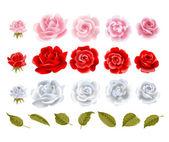 Vektor rosor. — Stockvektor