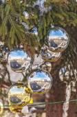 Vatican Christmas Tree Reflection — Stock Photo