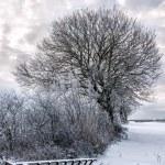Bleak Winter — Stock Photo #75324829